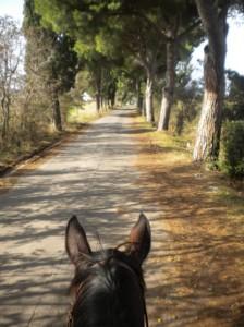 gita a cavallo escursioni Roma